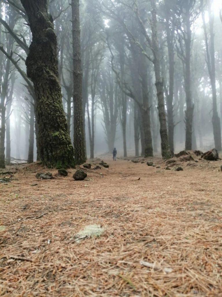 Niebla en la isla de El Hierro